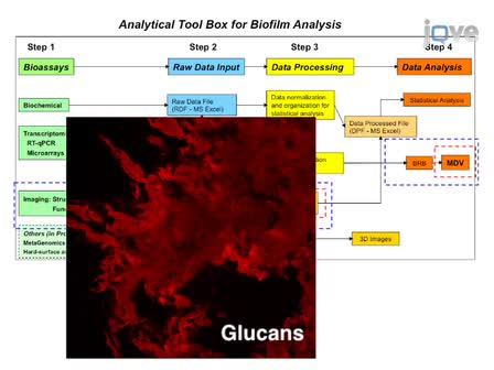 An Analytical Tool-box for Comprehensive Biochemical