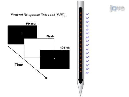 Examining Local Network Processing using Multi-contact Laminar