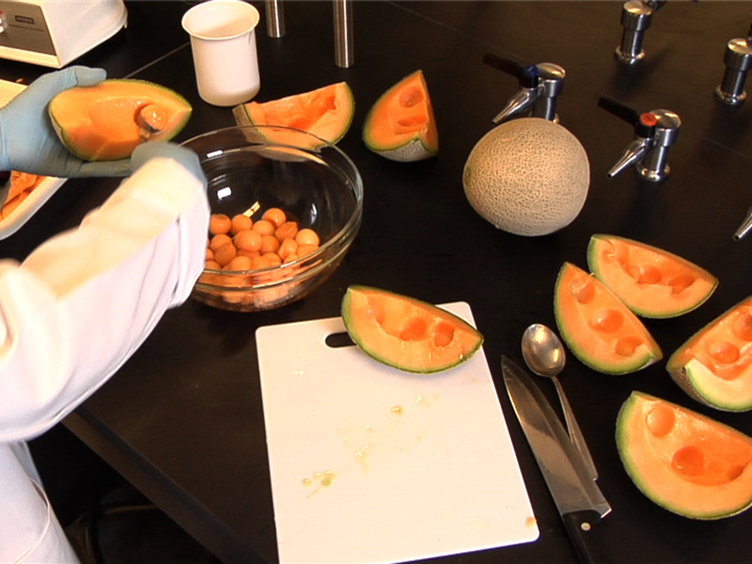 Fruit Volatile Analysis Using an Electronic Nose | Protocol