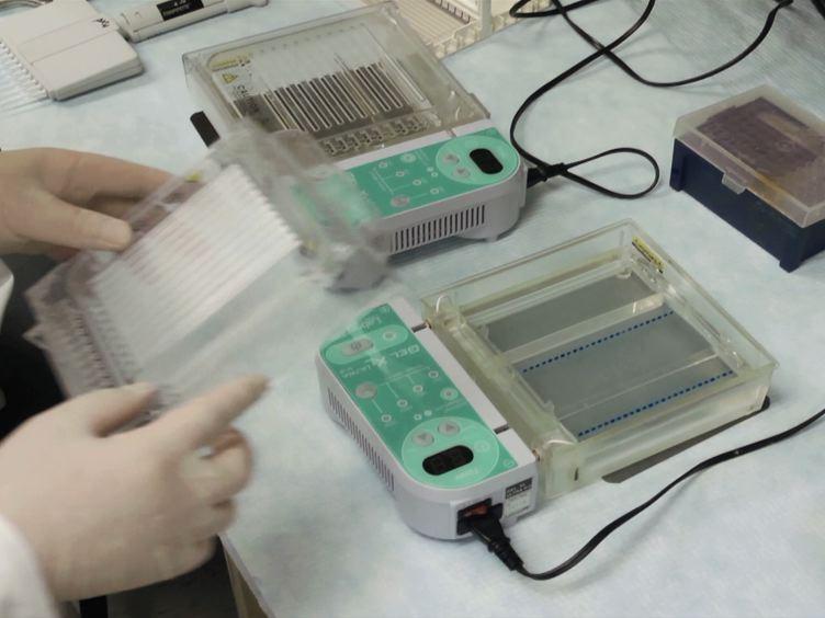 Genome-wide Gene Deletions in <em>Streptococcus sanguinis</em> by High Throughput PCR