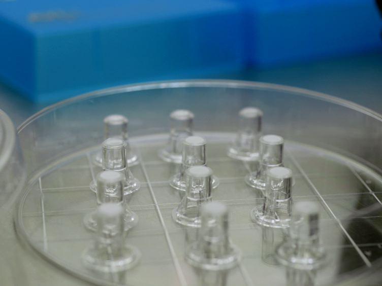 <em>In vitro</em> Coculture Assay to Assess Pathogen Induced Neutrophil Trans-epithelial Migration