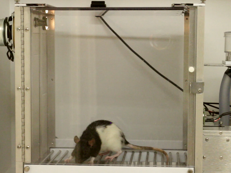 A Method for Remotely Silencing Neural Activity in Rodents During Discrete Phases of Learning