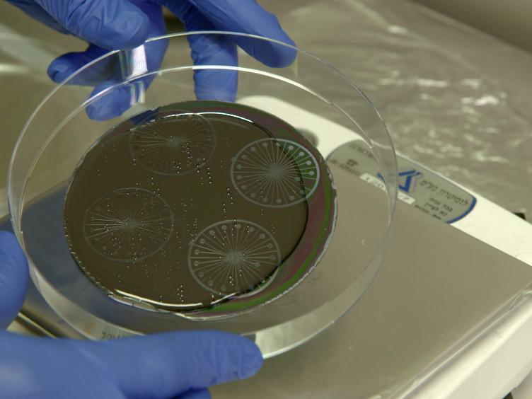 A Microfluidic Model of Biomimetically Breathing Pulmonary