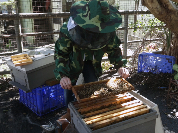 Evaluating the Effect of Environmental Chemicals on Honey