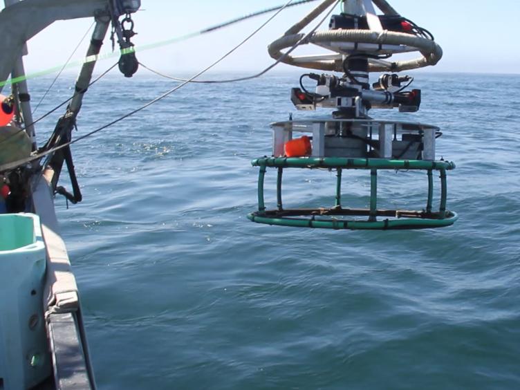 Development of New Methods for Quantifying Fish Density