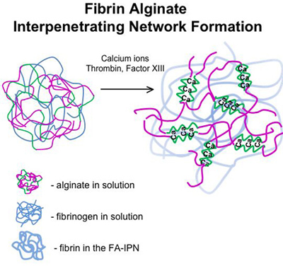 A Method for Ovarian Follicle Encapsulation and Culture in a