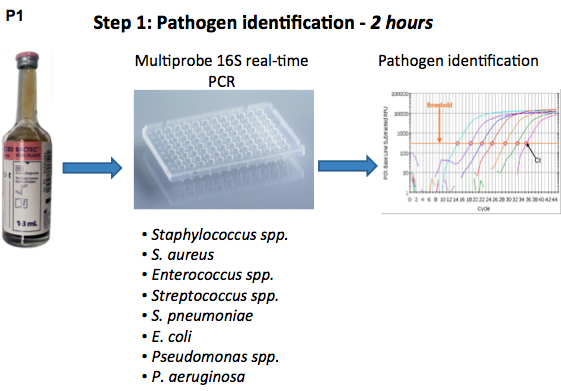 One-day Workflow Scheme for Bacterial Pathogen Detection and