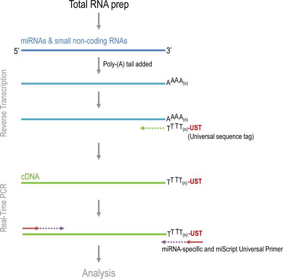 procedimientos de PCR de cáncer de próstata