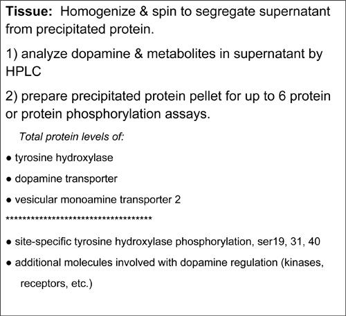 Comprehensive Profiling of Dopamine Regulation in Substantia