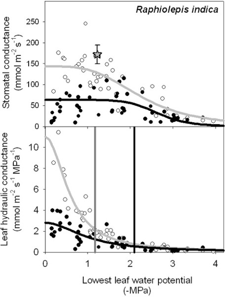 Measurement of Leaf Hydraulic Conductance and Stomatal
