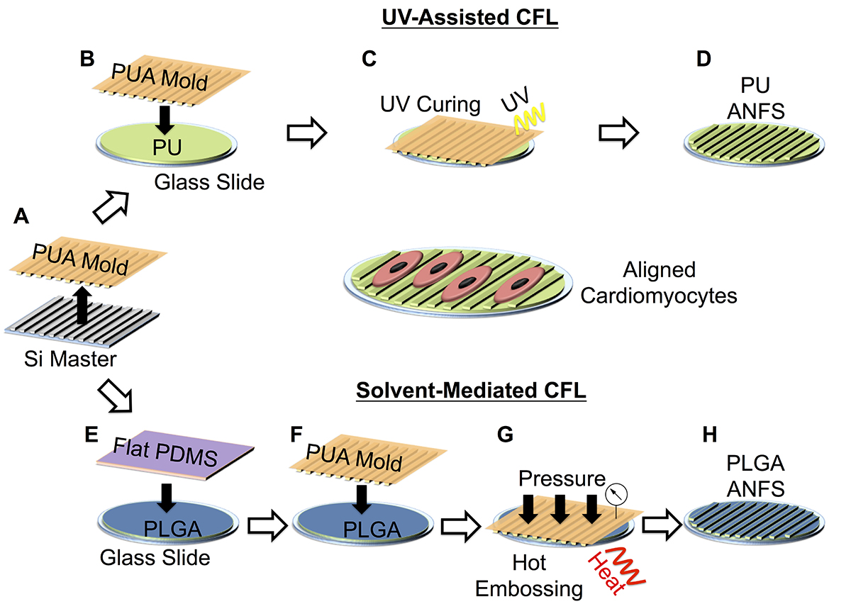Capillary Force Lithography for Cardiac Tissue Engineering