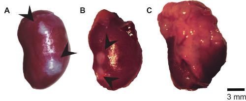 proticale per la salute della prostata
