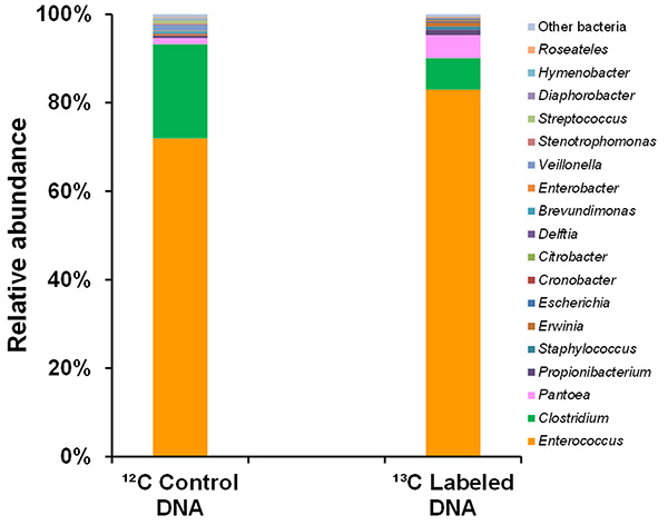 Identification of Metabolically Active Bacteria in the Gut of the