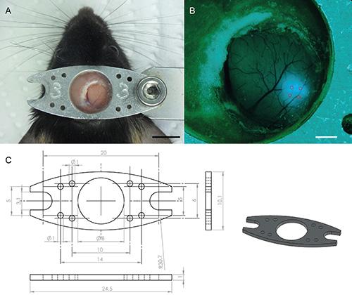 Schema Impianto Elettrico Zip 50 : Two photon calcium imaging in mice navigating a virtual reality