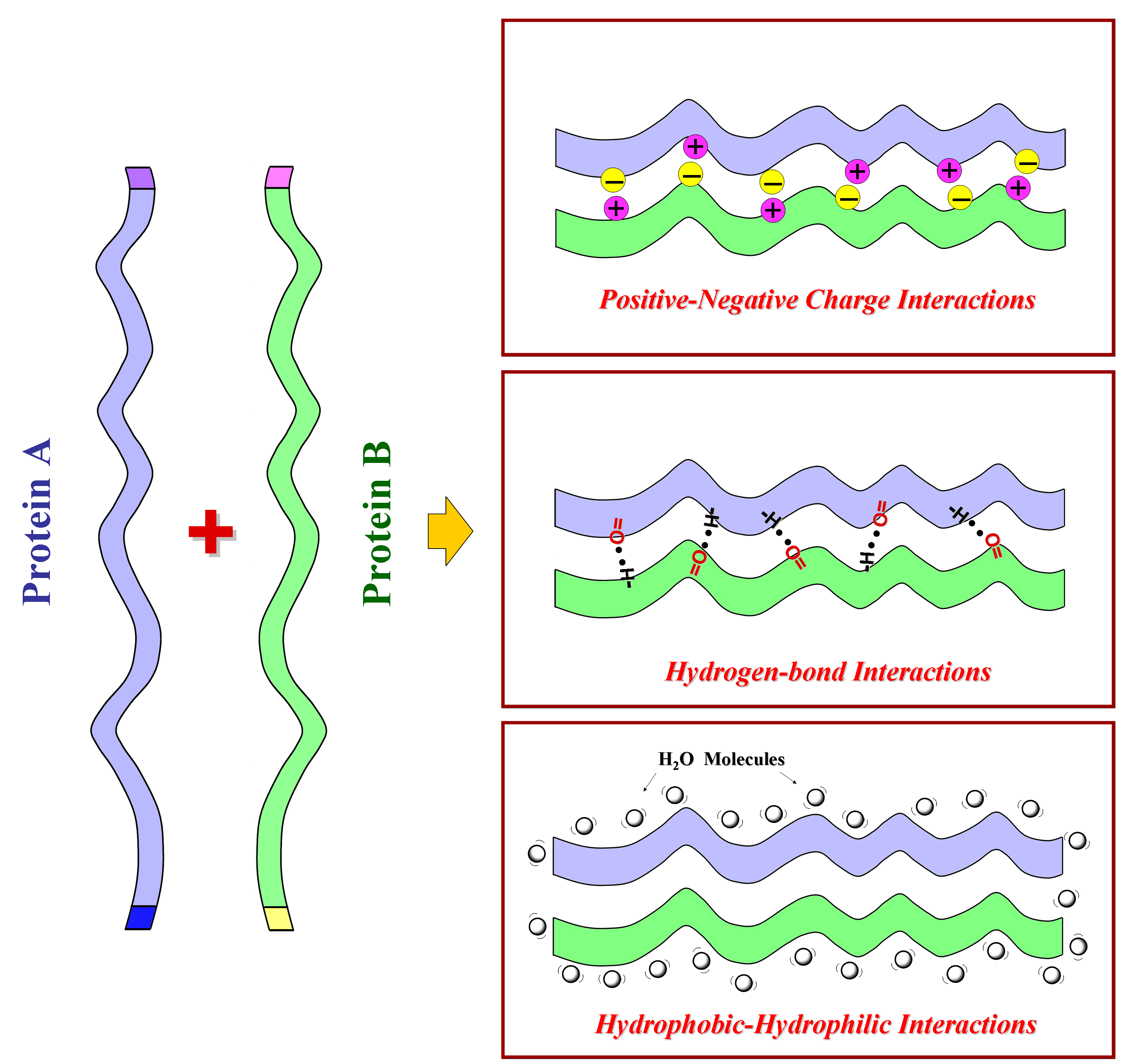 Designing Silk-silk Protein Alloy Materials for Biomedical