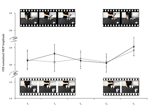 Corticospinal Excitability Modulation During Action Observation