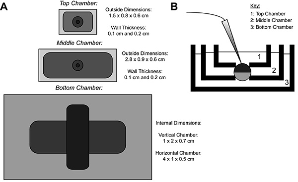 The Xenopus Oocyte Cut-open Vaseline Gap Voltage-clamp