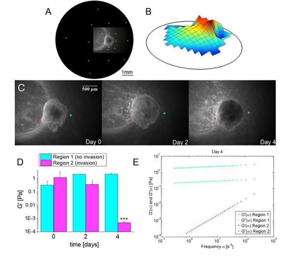 Longitudinal Measurement of Extracellular Matrix Rigidity in