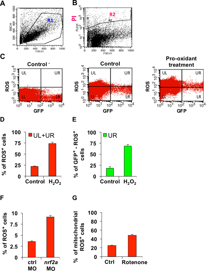 Analysis of Oxidative Stress in Zebrafish Embryos   Protocol