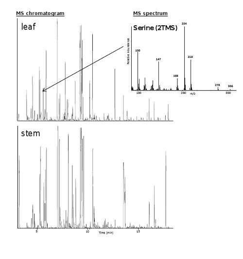 Transcript and Metabolite Profiling for the Evaluation of