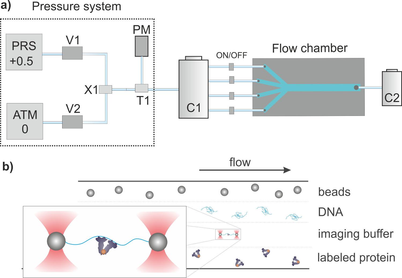 Figura 2 Schema di (A) sistema di flusso. Il sistema di controllo pressione  è composto da un misuratore di pressione (PM) e due elettrovalvole V1 e V2  ... 77013ad72873