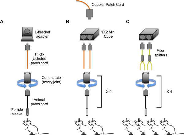 In vivo Optogenetic Stimulation of the Rodent Central Nervous System