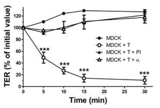 Analysis Of The Epithelial Damage Produced By Entamoeba Histolytica