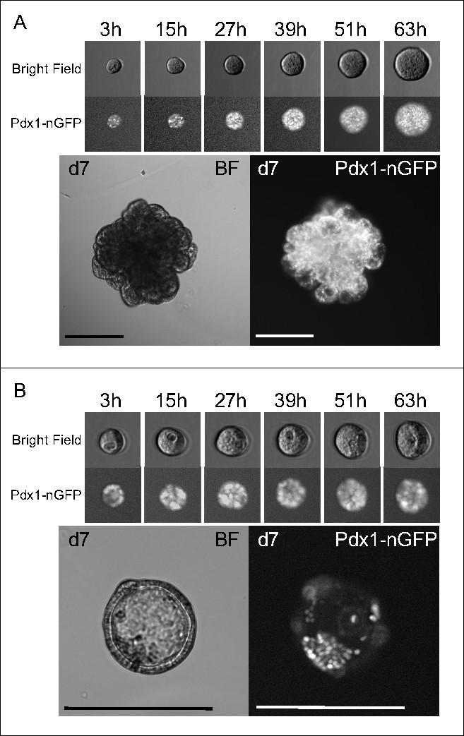 rm próstata apical sitio basal medios