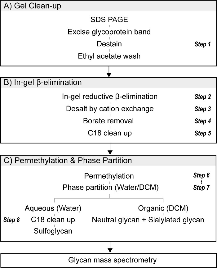 Improved In Gel Reductive β Elimination For Comprehensive O Linked