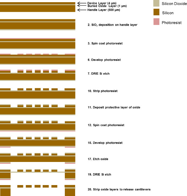 Utilization of Microscale Silicon Cantilevers to Assess Cellular