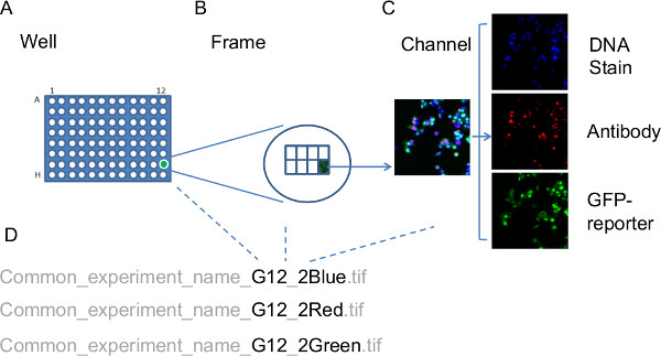 Workflow for High-content, Individual Cell Quantification of