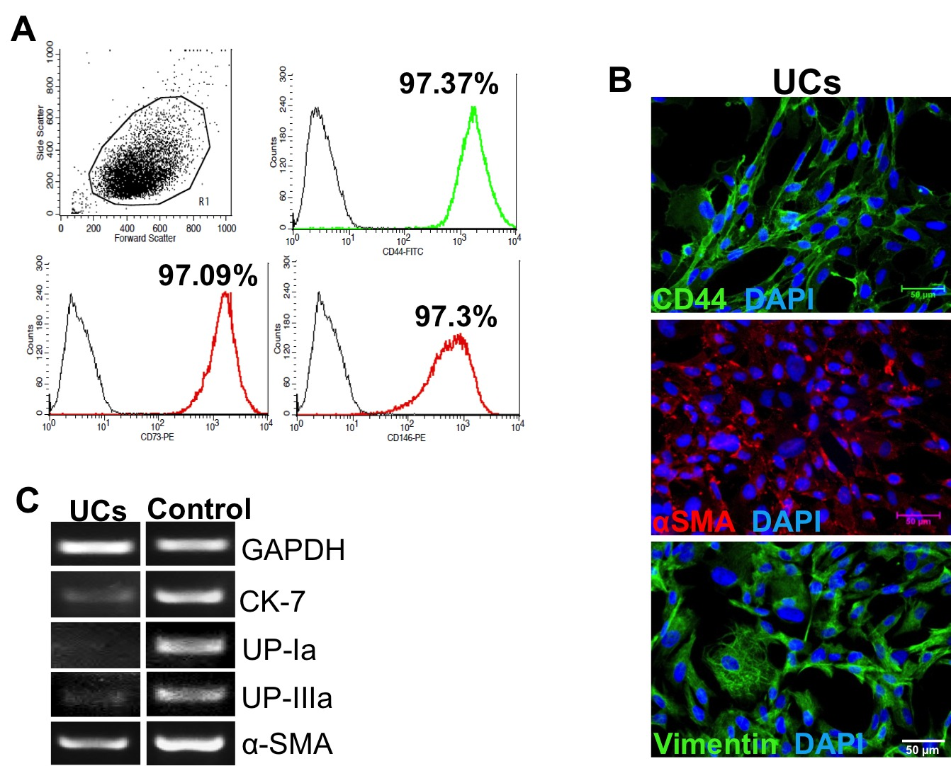 Generation Of Induced Pluripotent Stem Cells From Muscular Dystrophy
