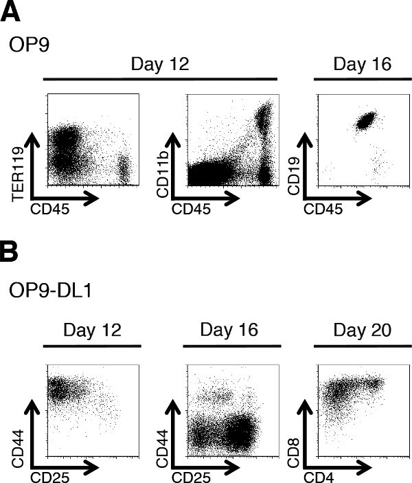 Derivation Of T Cells In Vitro From Mouse Embryonic Stem Cells
