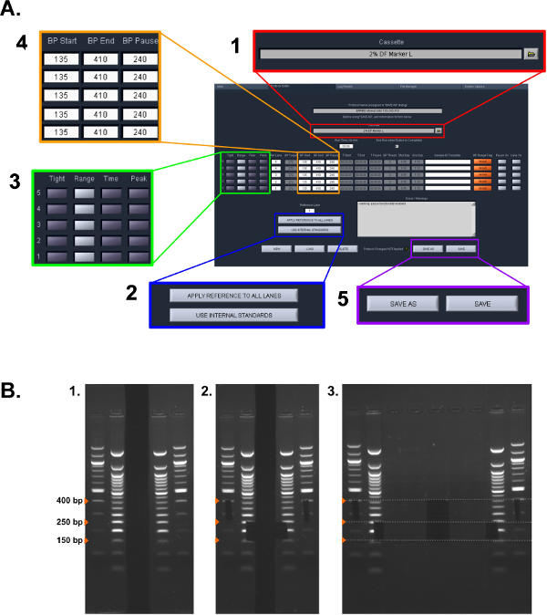 Enhanced Reduced Representation Bisulfite Sequencing for