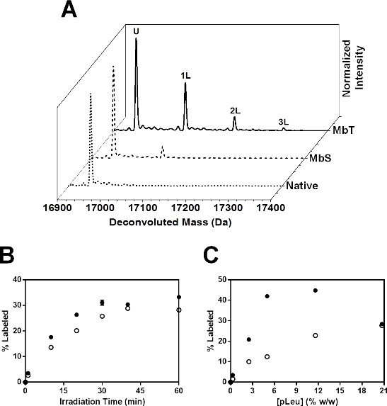 Mass Spectrometric Approaches to Study Protein Structure and