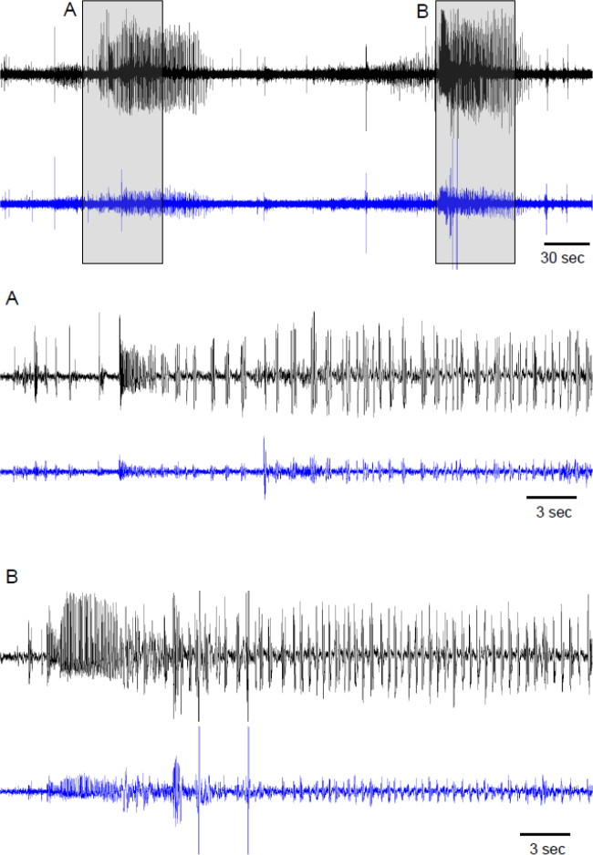 Long-term Continuous EEG Monitoring in Small Rodent Models