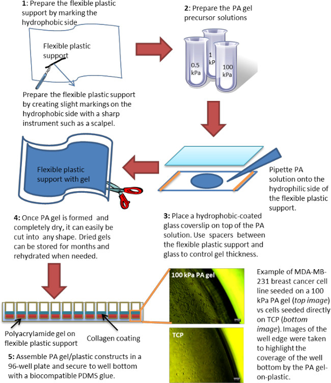Simple Polyacrylamide-based Multiwell Stiffness Assay for