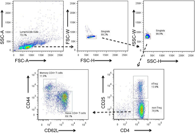 Mouse Naïve CD4+ T Cell Isolation and In vitro