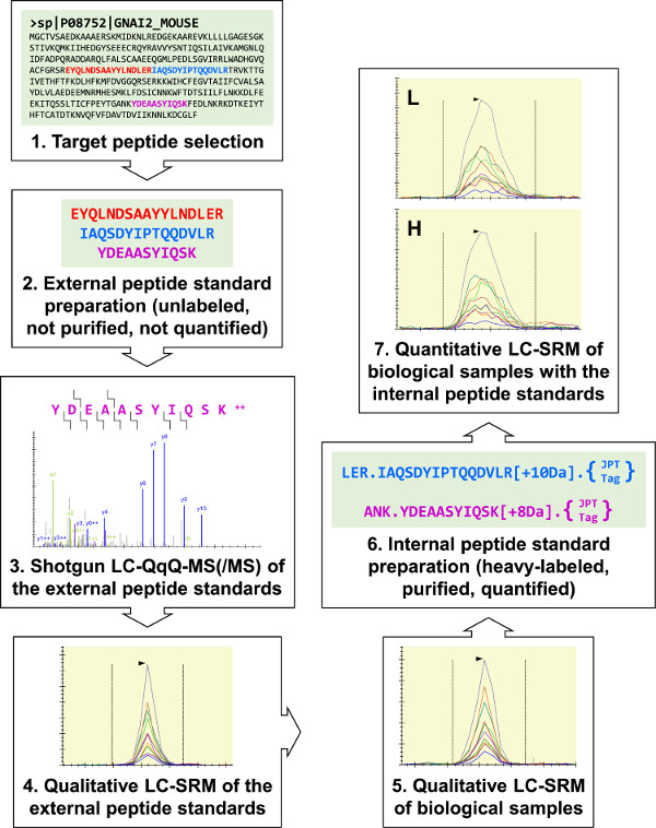 Selected Reaction Monitoring Mass Spectrometry For Absolute