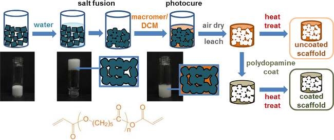 Fabrication of a Bioactive, PCL-based