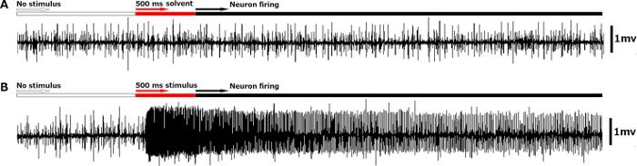 Using Single Sensillum Recording to Detect Olfactory Neuron