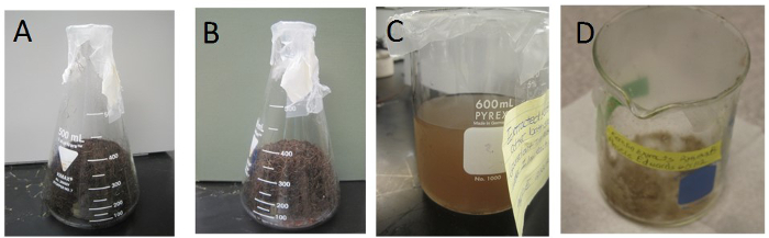 Synthesis Of Keratin Based Nanofiber For Biomedical Engineering