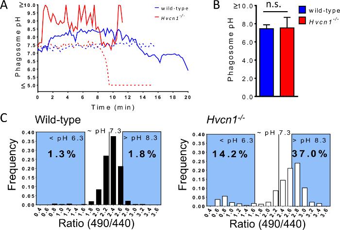 Measuring Phagosome Ph By Ratiometric Fluorescence