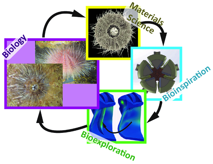 A Protocol for Bioinspired Design: A Ground Sampler Based on