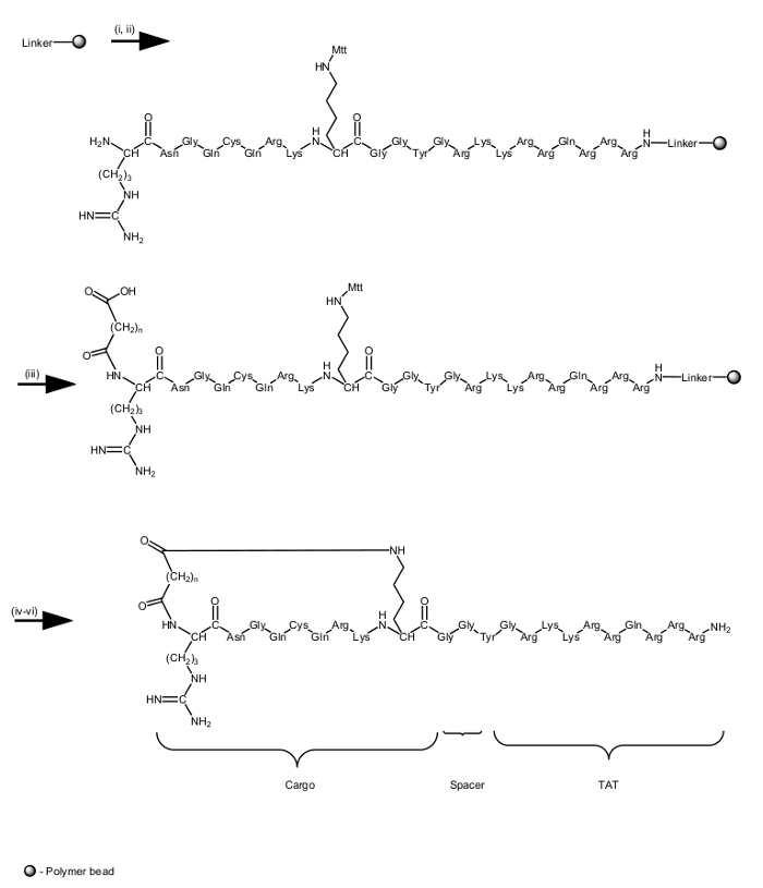 Development of a Backbone Cyclic Peptide Library as