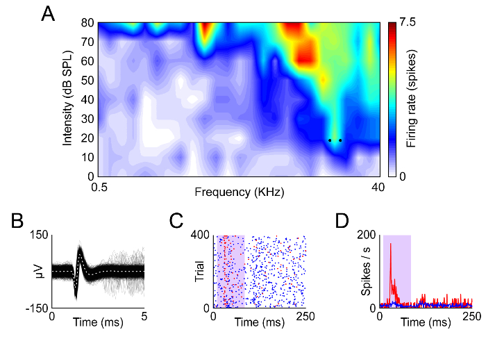 Extracellular Recording of Neuronal Activity Combined with