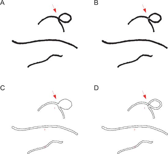 Foraging Path-length Protocol for Drosophila melanogaster Larvae