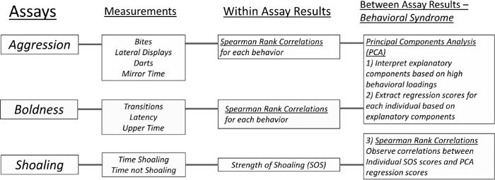 Boldness, Aggression, and Shoaling Assays for Zebrafish Behavioral