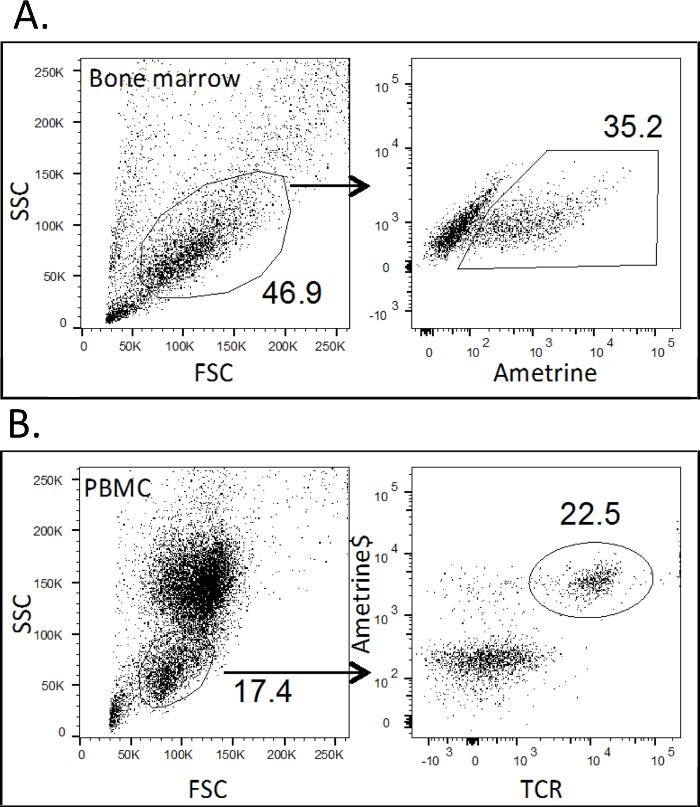 Retroviral Transduction of Bone Marrow Progenitor Cells to