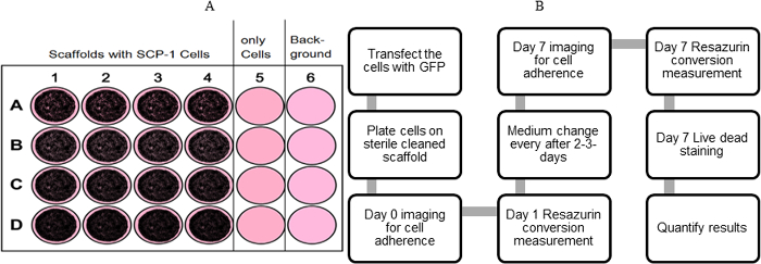 Imaging Cell Viability on Non-transparent Scaffolds — Using